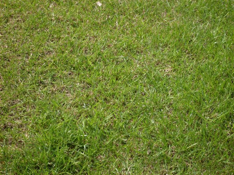 Как посадить газонную траву своими руками фото