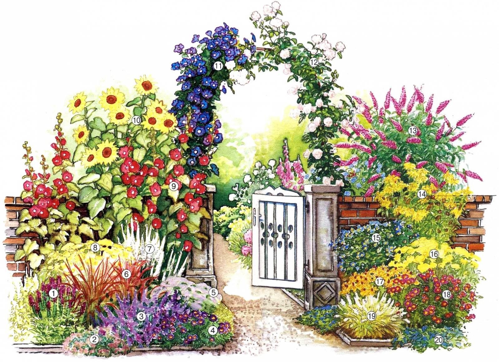 Красивые схемы цветников