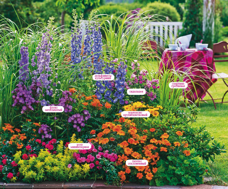 Цветы на клумбе многолетние