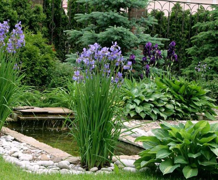 Ирисы в саду дизайн